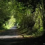 Boigneville - route d'Argeville